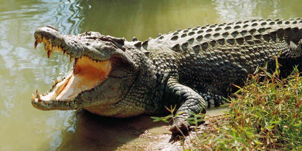 España rescate cocodrilos