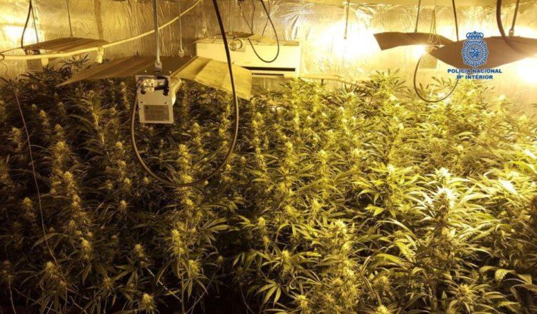 España plantación de Marihuana