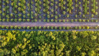 Deforestación aceite palma biodiesel