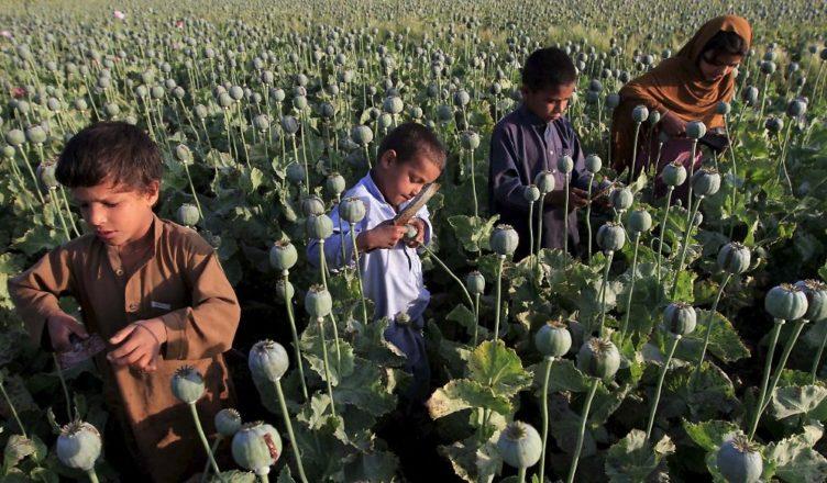 Afganistán Talibán opio